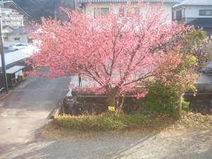 松原荘前に2018年の桜満開です