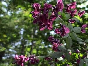 白骨に咲く花