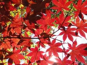 秋の紅葉01
