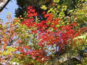 秋の紅葉02