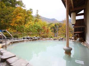 100%源泉かけ流しで味う乳白色の温泉と白骨渓谷の紅葉をたっぷり♪