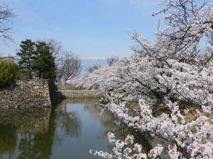 松本城のお堀を埋める桜