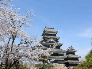 松本城と桜はよく似合います。