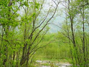 芽吹きの優しい緑に癒されます
