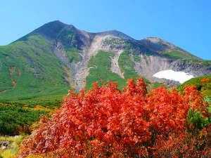 乗鞍高原の見事なナナカマドの紅葉(2017年9月25日撮影)