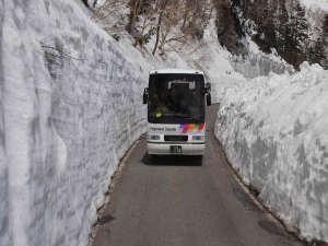 「乗鞍岳春山バス」6/30まで雪の回廊をお楽しみ下さい。