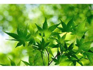 新緑のイメージ。散策に、写真撮影に気持ちのよい季節です。