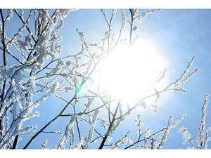 ◇冬のイメージ◇晴れた日の木々はきらきらして美しいです