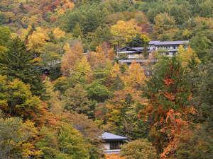 紅葉の森に囲まれた「えびすや」全景!白骨随一の絶景が楽しめる小さな宿