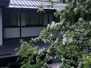 えびすやと小梨の花2017.6.1