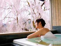 """温泉も、綺麗な桜も """"ひとり占め♪"""" こんな贅沢な時間が・・・なんと≪無料!≫"""