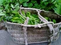 春限定の人気プラン!里山の山菜づくしプラン