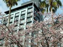 春の外観。桜に彩られる【ホテルミクラス】
